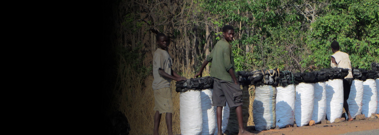 Charcoal for sale in Machinga District, Malawi